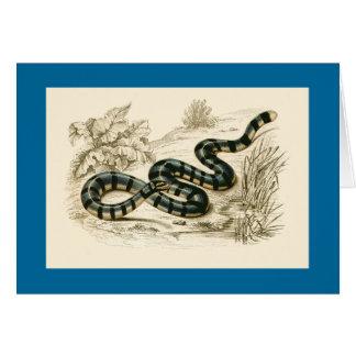 Orbigny - Sea-Snake - Platurus fasciatus Card