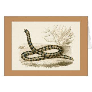 Orbigny - Snake - Tortrix scytale Card
