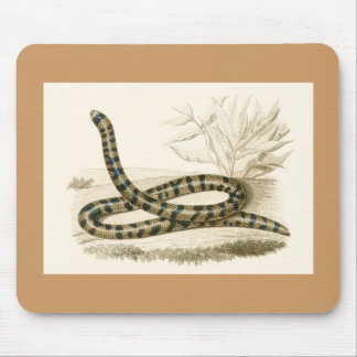 Orbigny - Snake - Tortrix scytale Mouse Pad