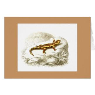 Orbigny - Spotted Salamander - Salamandra maculosa Card