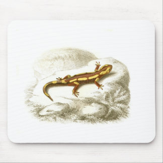 Orbigny - Spotted Salamander - Salamandra maculosa Mouse Pad