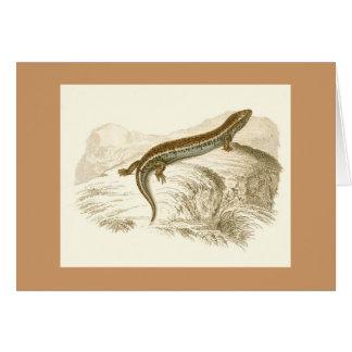 Orbigny - Thick-Tailed Skink - Gongylus occelatus Card