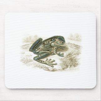 Orbigny - Treefrog - Trachycephalus geographicus Mouse Pad