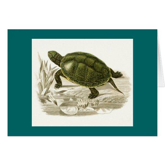 Orbigny - Turtle - Cistudo vulgaris Card