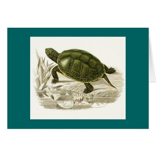 Orbigny - Turtle - Cistudo vulgaris Greeting Cards