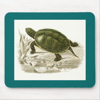 Orbigny - Turtle - Cistudo vulgaris Mouse Pad