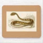 Orbigny - víbora de cuernos - cornutus del Ceraste Alfombrillas De Ratón