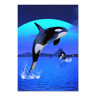 Orca 1 card