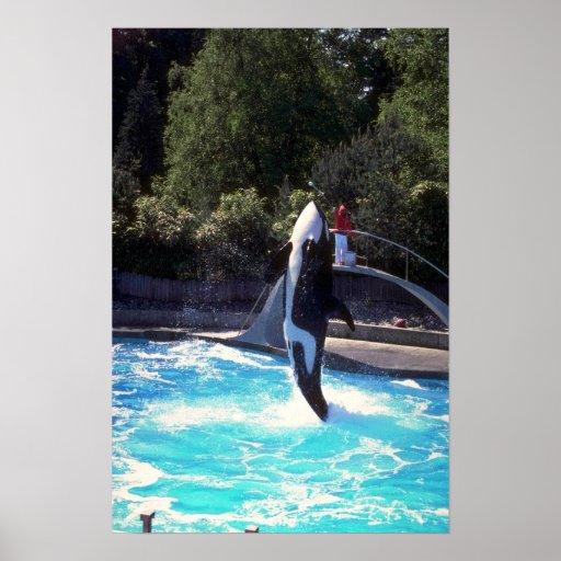 Orca, acuario de Vancouver, Columbia Británica Póster