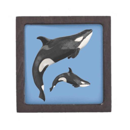 Orca aislada caja de regalo de calidad