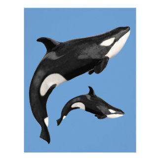 Orca aislada membrete a diseño