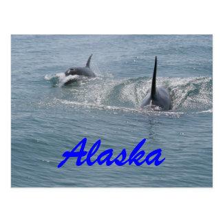 Orca and calf, Alaska Postcard
