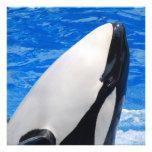 Orca Anuncios Personalizados