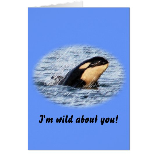 Orca Baby Spy Hop In Pastel Card
