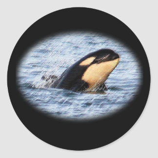 Orca Baby Spy Hop In Pastel Classic Round Sticker