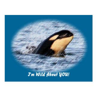 Orca Baby Spy Hop In Pastel Postcard