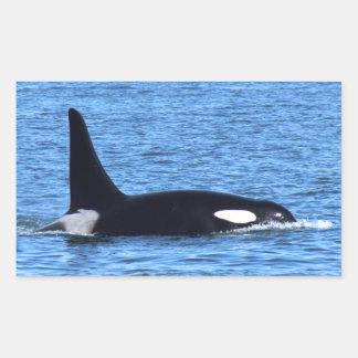 Orca Blackberry Pegatina Rectangular