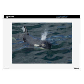 "Orca blowing 15"" laptop decal"