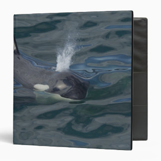 Orca blowing 3 ring binder