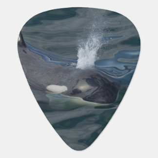 Orca blowing guitar pick