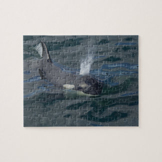 Orca blowing jigsaw puzzle