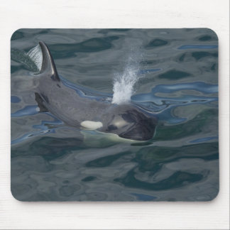 Orca blowing mouse pad