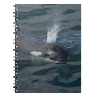 Orca blowing notebook