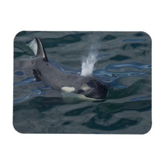 Orca blowing flexible magnet