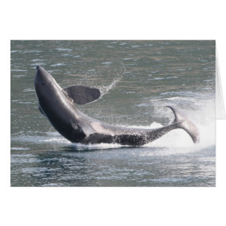 Orca breaching in Alaska Card