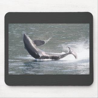 Orca breaching in Alaska Mousepad