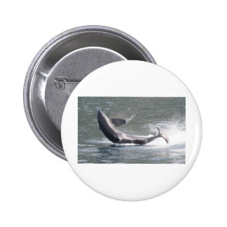 Orca breaching in Alaska Pinback Buttons