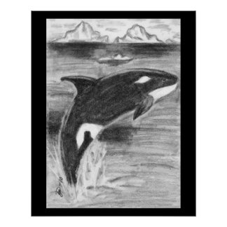 Orca Breaching Perfect Poster