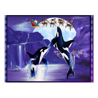 Orca Christmas Postcard