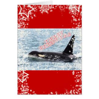Orca Christmas Winter Wonderland Holiday Greeting Cards