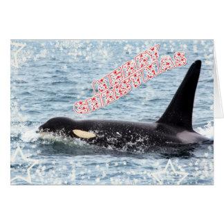 Orca Christmas Winter Wonderland Holiday Greeting Card
