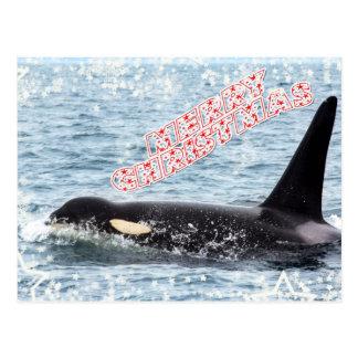 Orca Christmas Winter Wonderland Holiday Post Cards