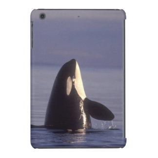 Orca de la orca de Spyhopping (orcinus de la orca) Fundas De iPad Mini Retina
