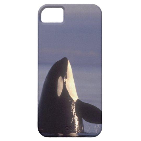 Orca de la orca de Spyhopping (orcinus de la orca) Funda Para iPhone SE/5/5s