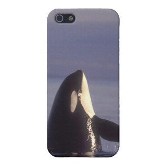 Orca de la orca de Spyhopping (orcinus de la orca) iPhone 5 Carcasa