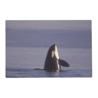 Orca de la orca de Spyhopping (orcinus de la orca) Tapete Individual