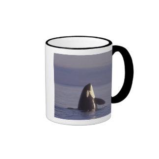 Orca de la orca de Spyhopping (orcinus de la orca) Taza De Dos Colores