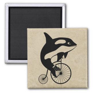 Orca de la orca en la bici del vintage imán cuadrado