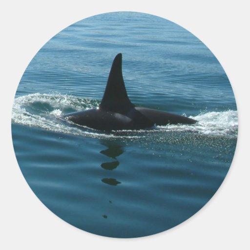 Orca de la orca pegatina redonda