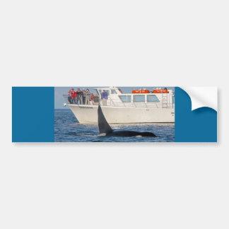 Orca de la orca - transeúnte, Washington Pegatina Para Auto