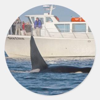Orca de la orca - transeúnte, Washington Pegatina Redonda