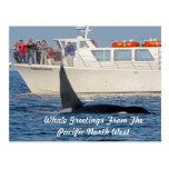 Orca de la orca - transeúnte, Washington Tarjeta Postal