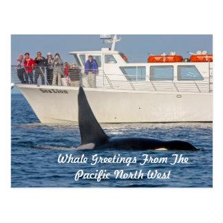 Orca de la orca - transeúnte, Washington Tarjetas Postales