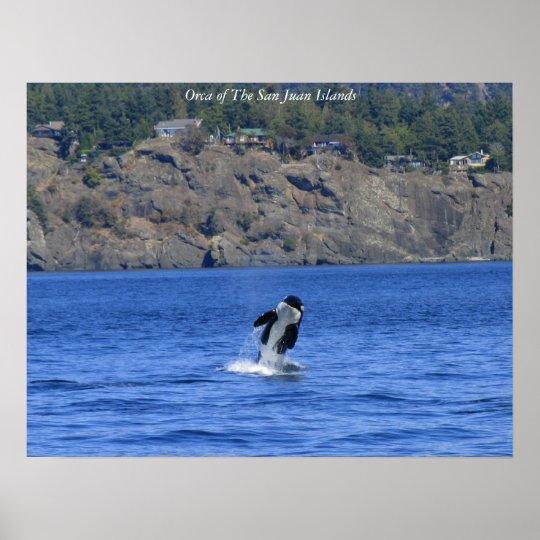 Orca de las islas de San Juan Póster