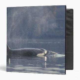 """Orca del Orcinus de la ballena de la orca de la he Carpeta 1 1/2"""""""