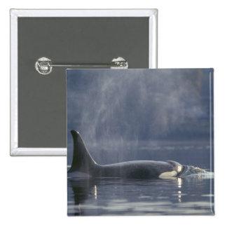 Orca del Orcinus de la ballena de la orca de la he Pin Cuadrada 5 Cm
